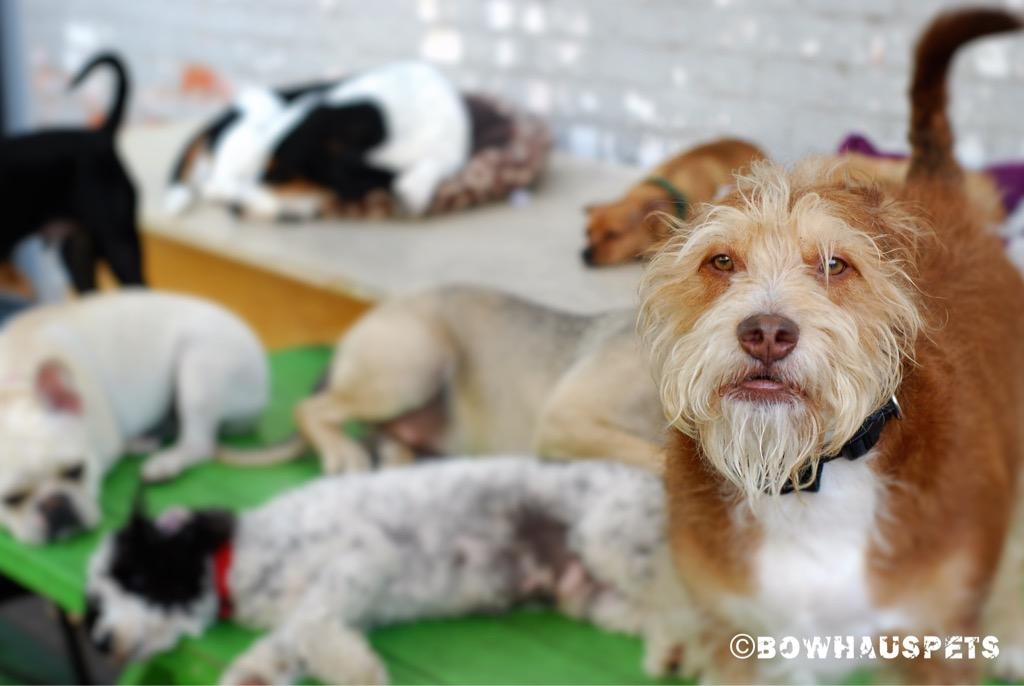 New Bowhaus Bungalows Bowhaus Pet Company