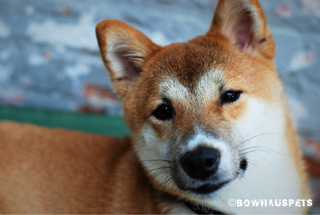 Home Bowhaus Pet Company